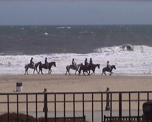 A lounge-view of horseback riding on the beach.