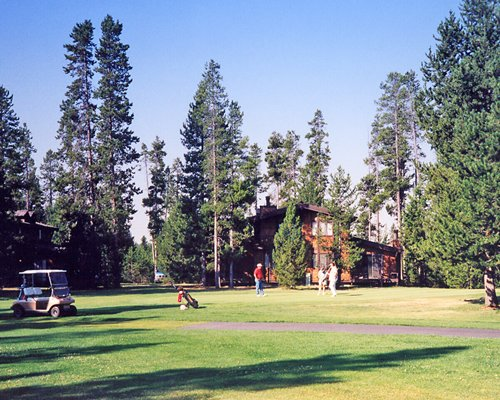 Golfers playing on a golf course surrounded by tall pines.