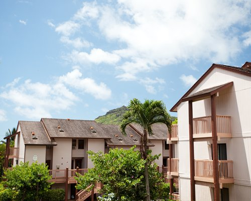 Exterior view of multiple condo balconies with palm tree and mountain in the backdrop.