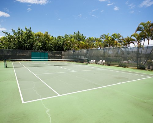 An outdoor tennis court surrounded by palm trees.