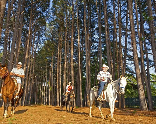 People horseback riding through the woods.