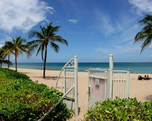 Beach view of ocean waters alongside coconut trees.