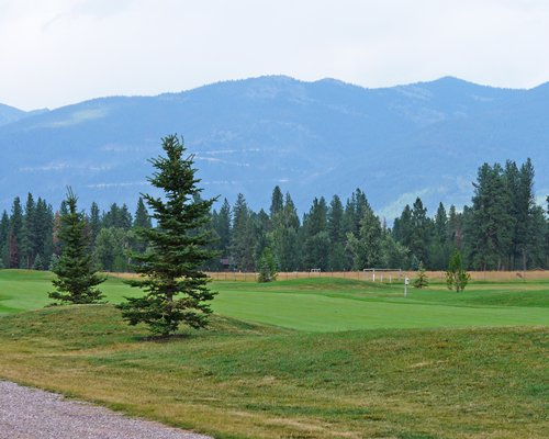 A golf course surrounded by pine trees.