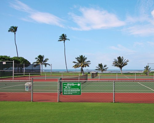 An outdoor view of the tennis court surrounded by palm trees.