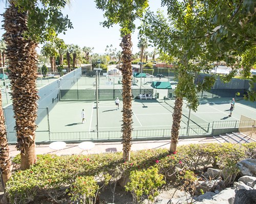 Outdoor tennis court surrounded by a landscaped area.