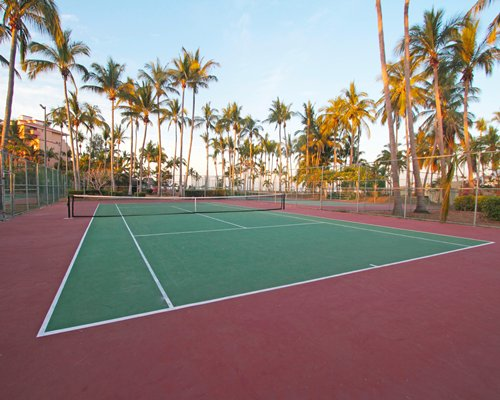 Outdoor tennis court surrounded by coconut trees.