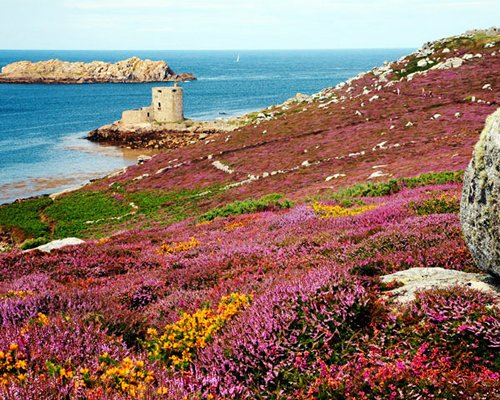 A scenic view of the ocean with flowers.