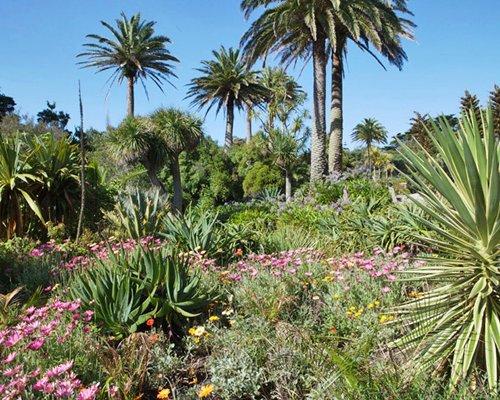 Garden area with flowering shrubs.