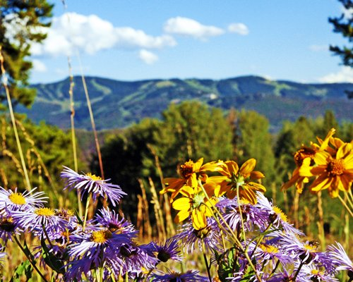 View of flowers and mountains in summer.
