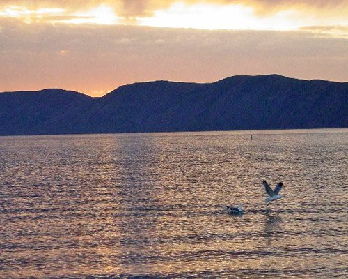 A bird catching a fish in the sea with a mountain backdrop at dusk.