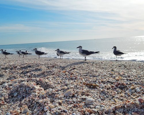 A group of birds on the shore.