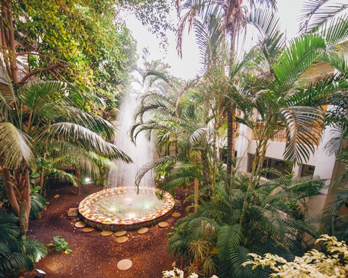 Fountain surrounded by palm plants.