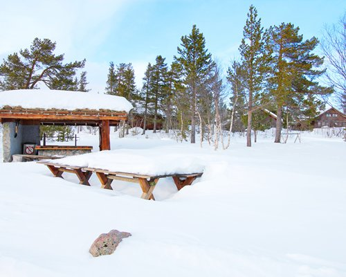 An outdoor picnic area with pine trees covered in snow.