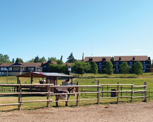 Scenic view of a horse barn and a horse alongside the resort units.