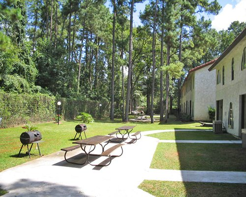An outdoor picnic area with multiple barbecue grills surrounded by wooded area.