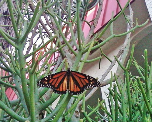 A butterfly on the plant.