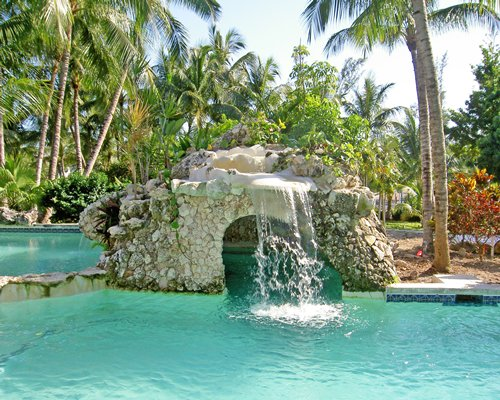 An outdoor pool with a waterfall surrounded by coconut trees.