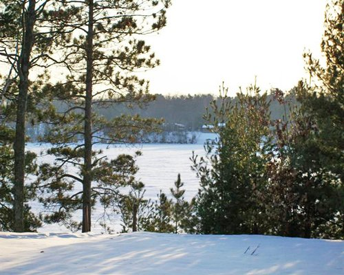 View of wooded area during winter.