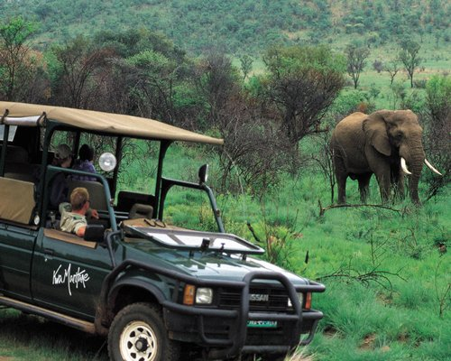 Family on a jungle safari looking at an elephant.