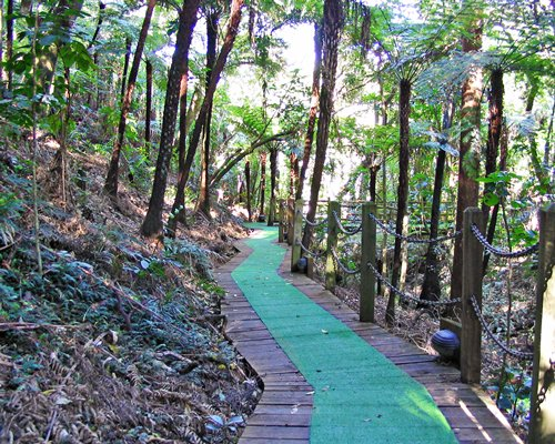 A wooden pathway surrounded by wooded area.