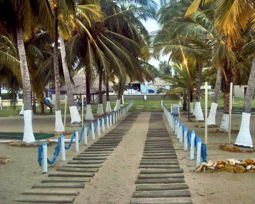 A pathway leading to the resort surrounded by coconut trees.