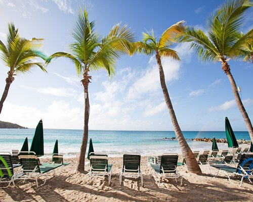 View of the beach with chaise lounge chairs sunshades and palm trees.