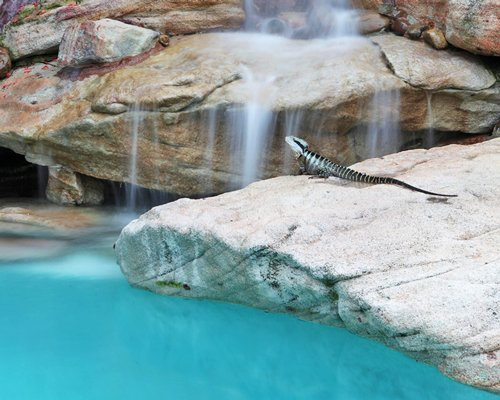 A view of the lizard in the grotto pool.