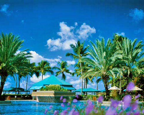 Outdoor swimming pool surrounded by palm trees.