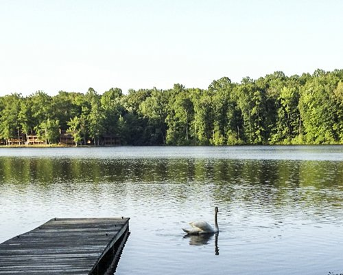 View of the wooden pier in the lake with a swan surrounded by woods.