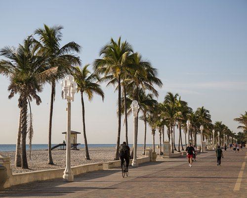 A pathway with palm trees alongside the beach.