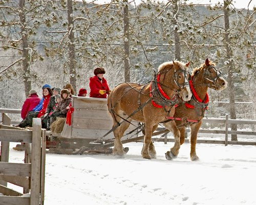 A view of people going on a horseback ride during winter.