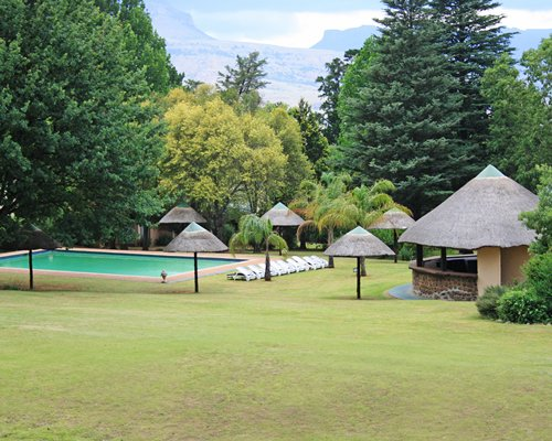 A scenic outdoor swimming pool with thatched sunshades alongside the trees.