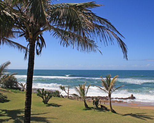 View of the coconut trees alongside a coastal area of the ocean.