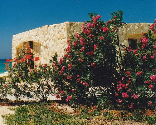 An exterior view of the resort unit with flowering shrubs.
