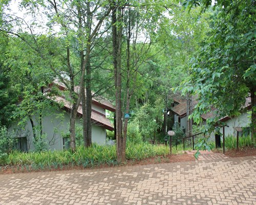 Exterior view of a pathway leading to units at Drakensberg Sun surrounded by wooded area.