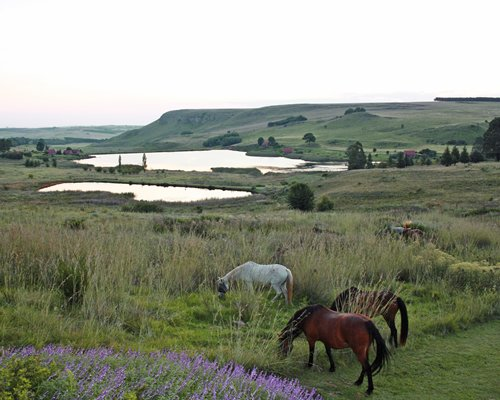A view of horses grazing in a meadow alongside a waterfront.