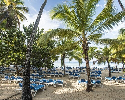 A view of chaise lounge chairs with trees facing the ocean.