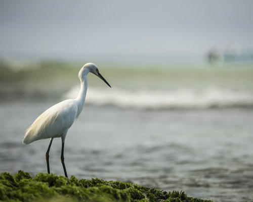 A view of an egret bird.