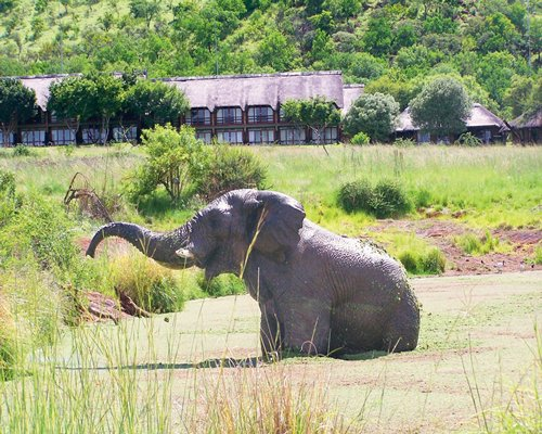 An outdoor recreational area with an elephant bathing in a pond alongside resort units.