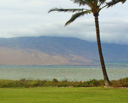View of the ocean with palm tree alongside the mountain.