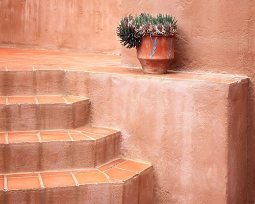 A staircase alongside a cactus plant in a pot.