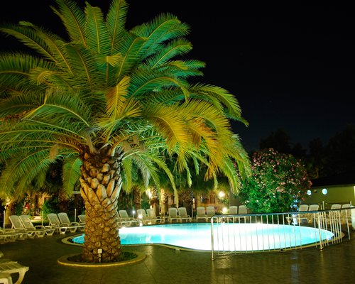 An outdoor swimming pool with chaise lounge chairs and a palm tree at night.