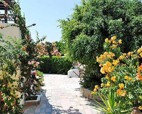 A paved pathway with flowering shrubs.