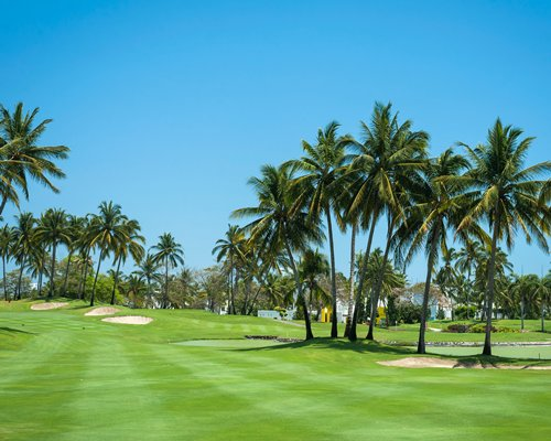 View of the golf course with palm trees.