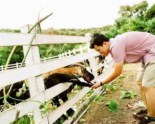 A man feeding the sheep.