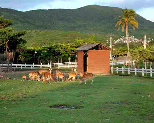 Herd of deer at a landscaped area alongside the mountains.