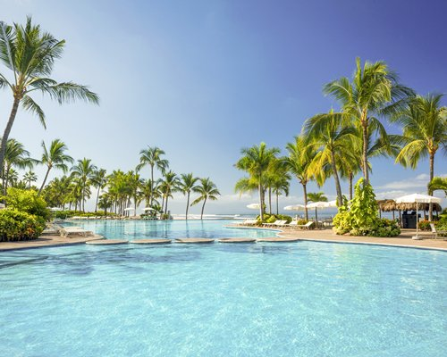 An outdoor swimming pool with coconut trees.