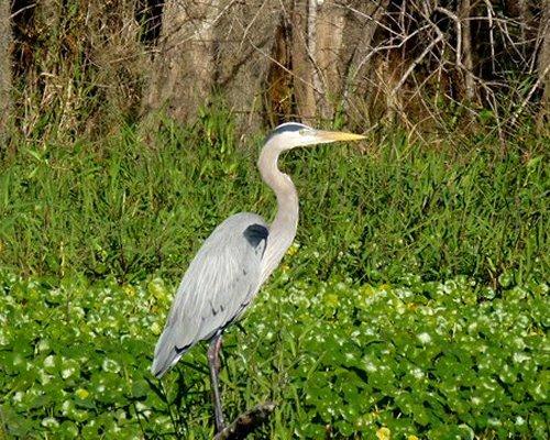 An egret bird.