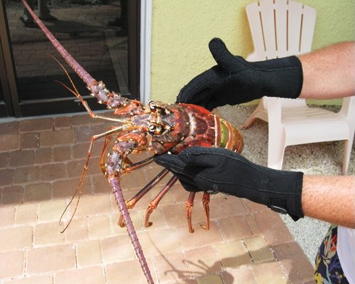 A man holding a lobster.