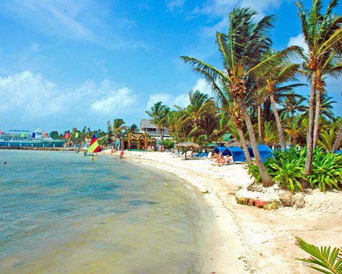 View of the beach with coconut trees.
